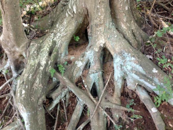 4.木の根